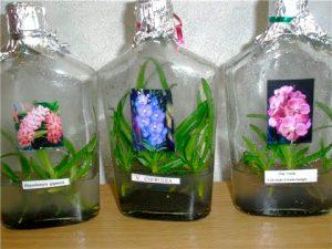 orchid-bottle
