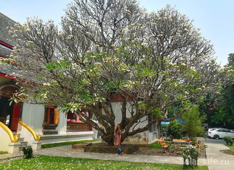 wat-chiangman